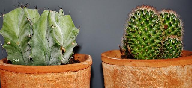 744-reciclando-cactus-puertas-armario-madera-espejos-mirrors-sietecuatrocuatro