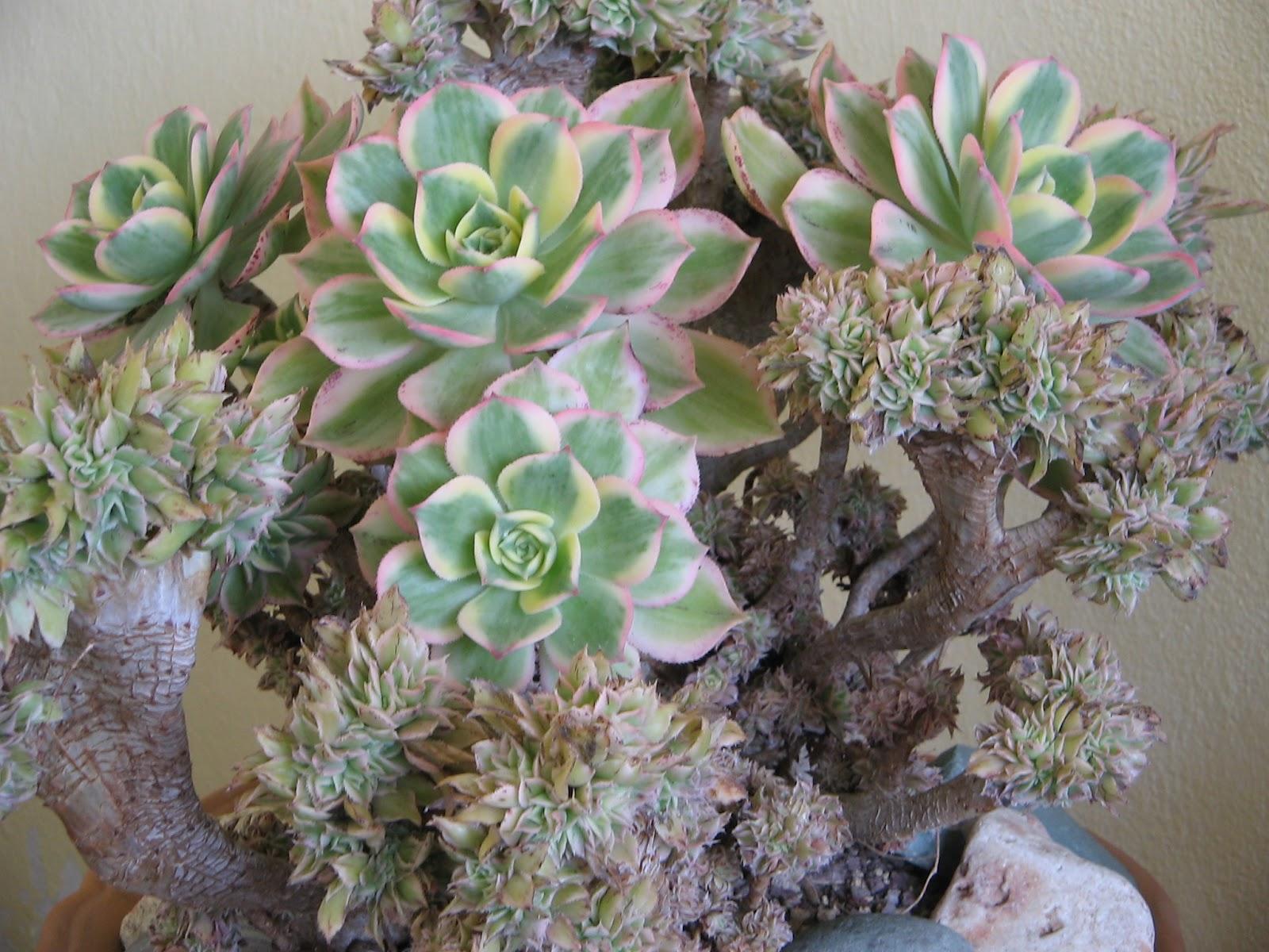 Living ravenna visita alla mostra di piante grasse al mar for Foto piante grasse particolari