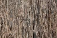free natural tree texture