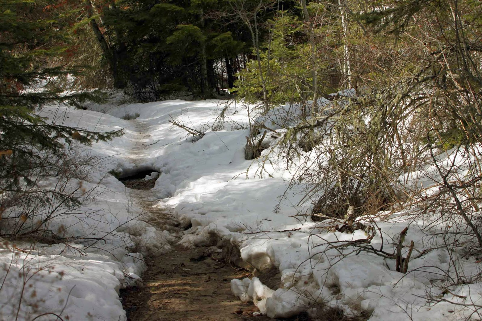 Bass Creek NRA trail in March, snow blanketing ground