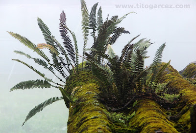Vegetação típica de lugares úmidos que se desenvolve em Paranapiacaba