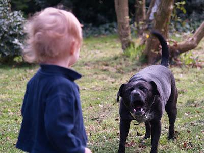 aggressive-dog-behavior-towards-children
