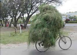 funniest picture: hay on a bicycle