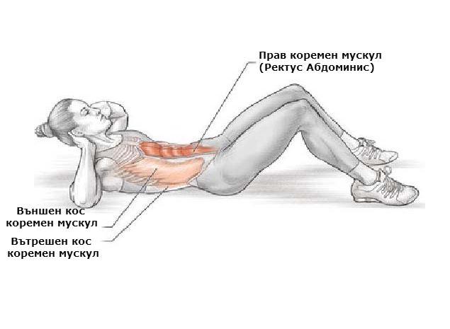 Кои мускули вземат участие при коремните преси