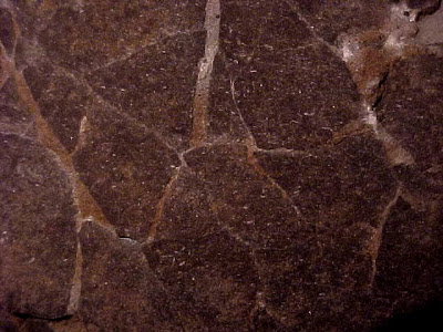 Authentic Prehistoric Hadrosaur Dinosaur Fossil Egg