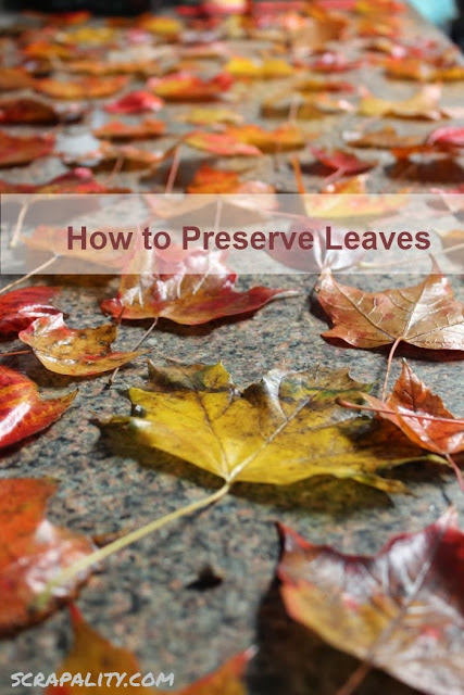 Preserving Leaves