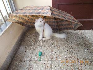 """""""CAT MODEL MATAHARI""""."""