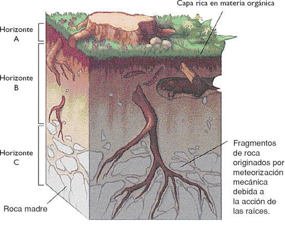 Opiniones de estructura del suelo for Partes del suelo
