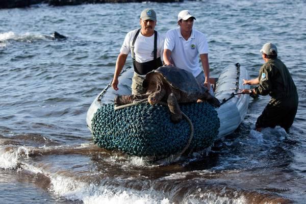 tarta rughe galapagos tartarughe giganti 39 tosaerba 39