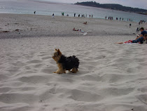 Charlee at carmel by the sea