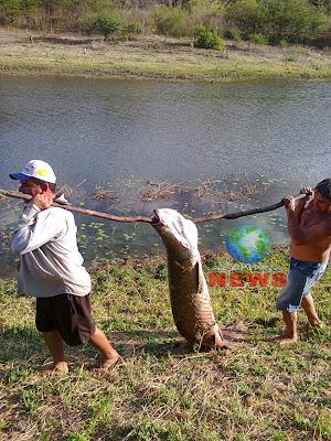 Pescadores capturam peixe gigante em açude de Acopiara