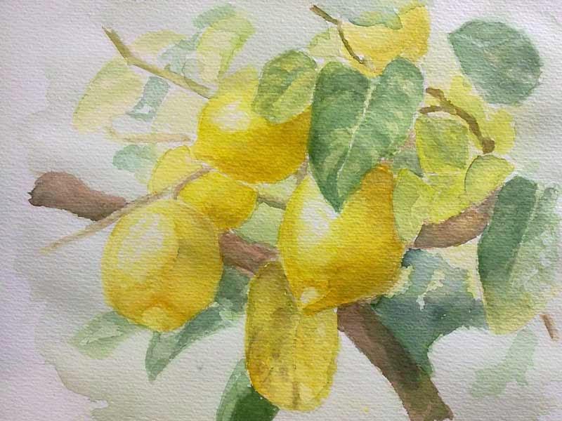 apunte de unos limones en acuarela