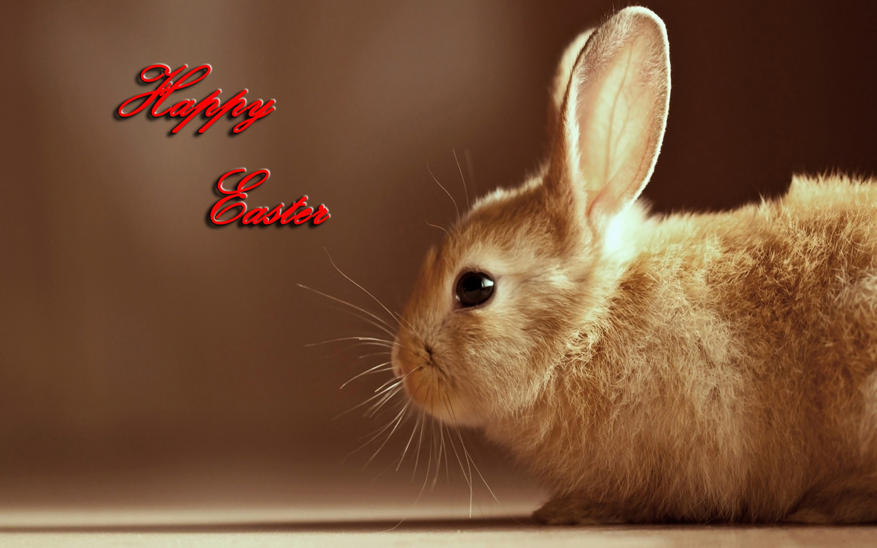 free download easter 2013 hd wallpapers for android tablets | tips