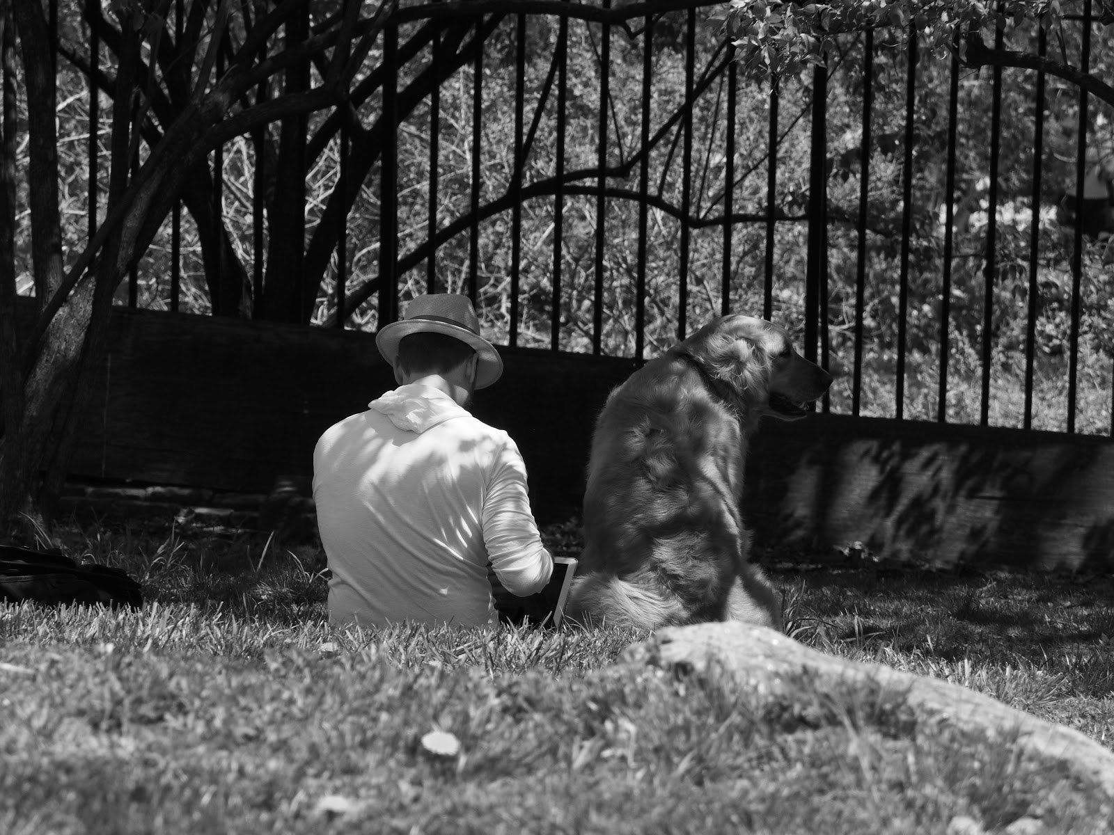 Best Friends #bestfriendsbw #dog  #NYC #CentralPark #mansbestfriend #blackandwhite #frombehind 2014
