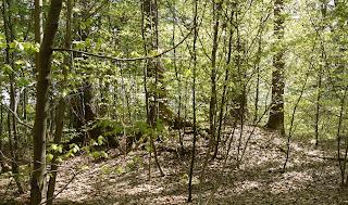 Bild 12: Hügel in der Grabhügelgruppe Höllriegelskreuth/Pullach