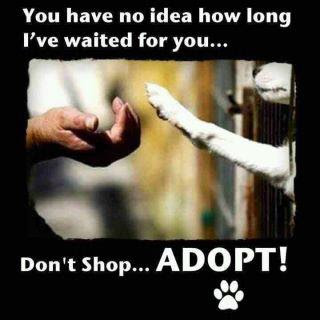 Until there's none - adopt one!