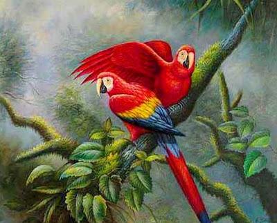 guacamayas-rojas-en-arbol