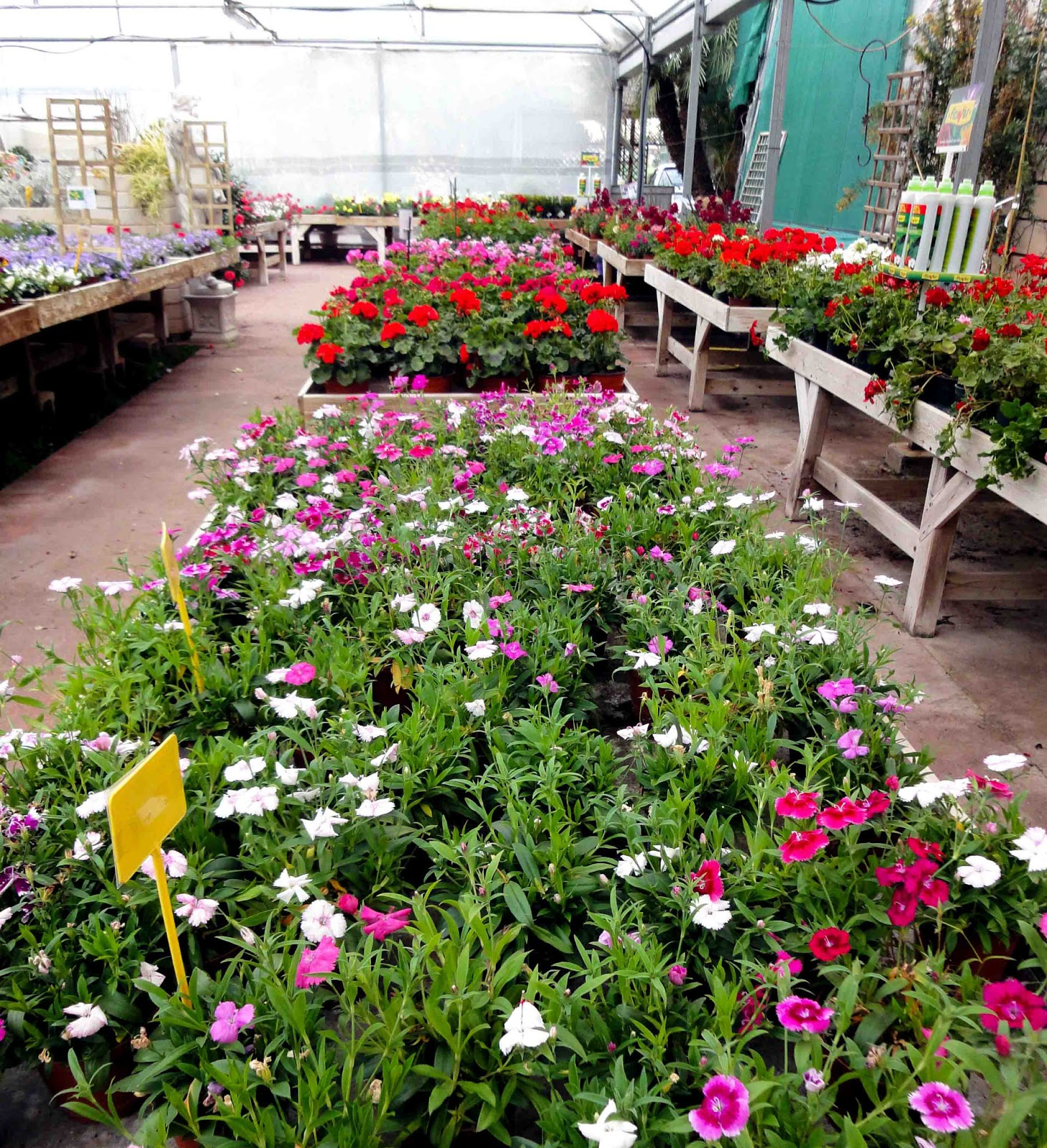 El sello verde paseando en garden center for Idea verde garden center