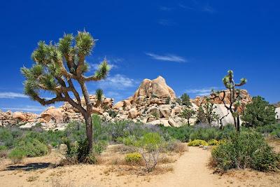 Paisajes del desierto con arbustos rocas y dunas