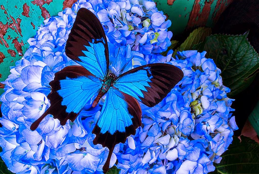 Cuadros modernos pinturas y dibujos mariposas y flores for Mural de flores y mariposas