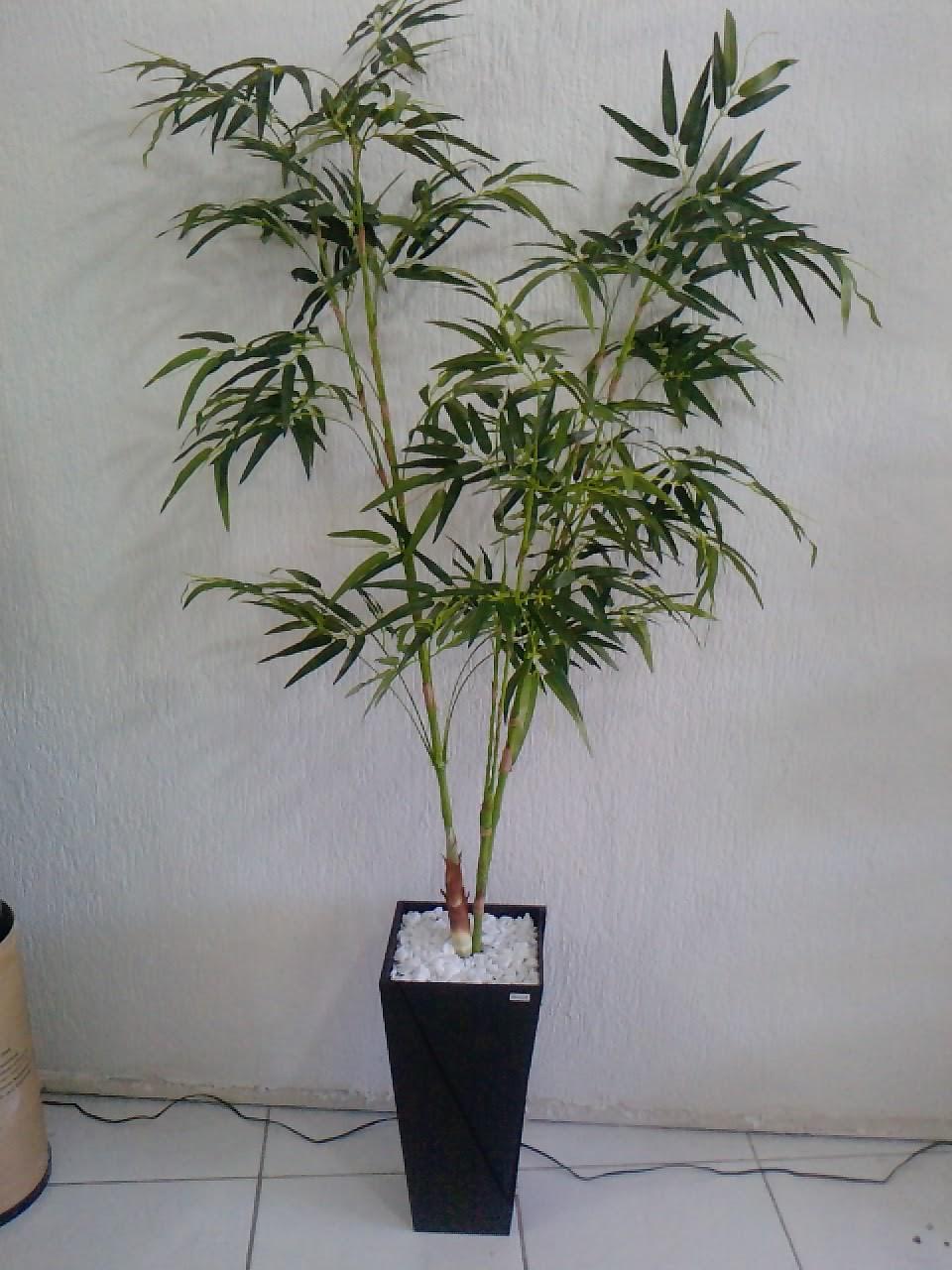 Flores do imp rio 59 vaso orqu deas 60 mini bambu - Canne bambu in vaso ...