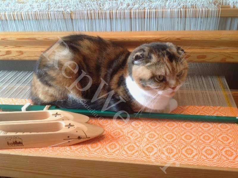 Dot, the Scottish Fold cat, lounging on the well of my warp.