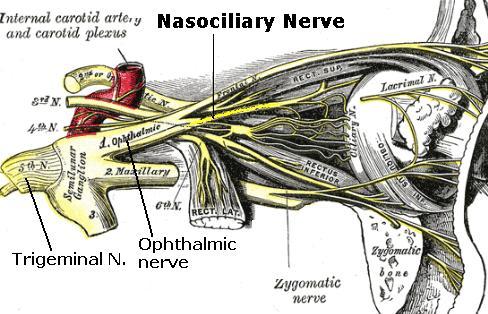 Anterior Ethmoidal Nerve