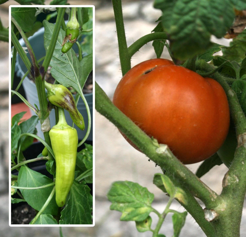 Tomato and chili