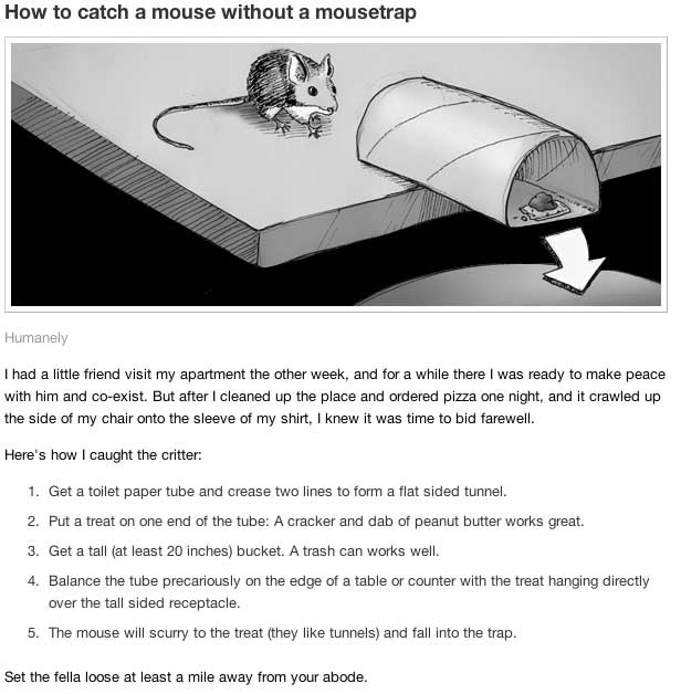 illustration and steps to catch a mouse humanely