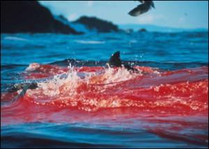 Необычная рыбалка на запах крови