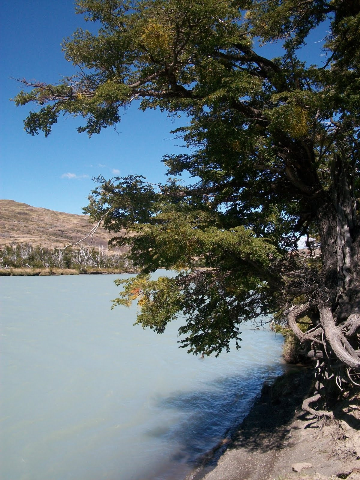 Circuito O Torres Del Paine : Murdog circuito quot o torres del paine