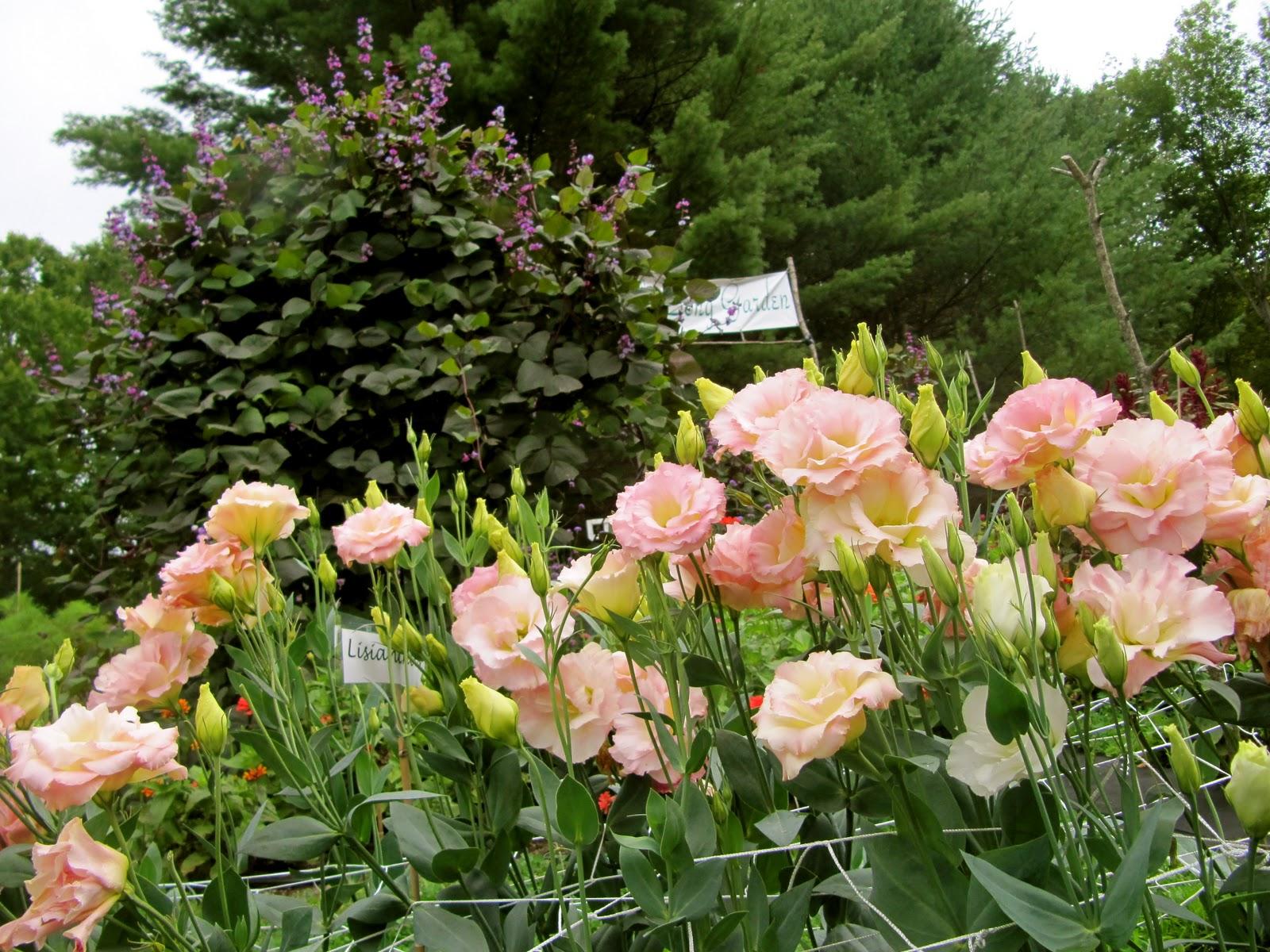 Backyard Flower Farmer : The Song Garden Flower Farm and Tea House of Cornish, NH  February