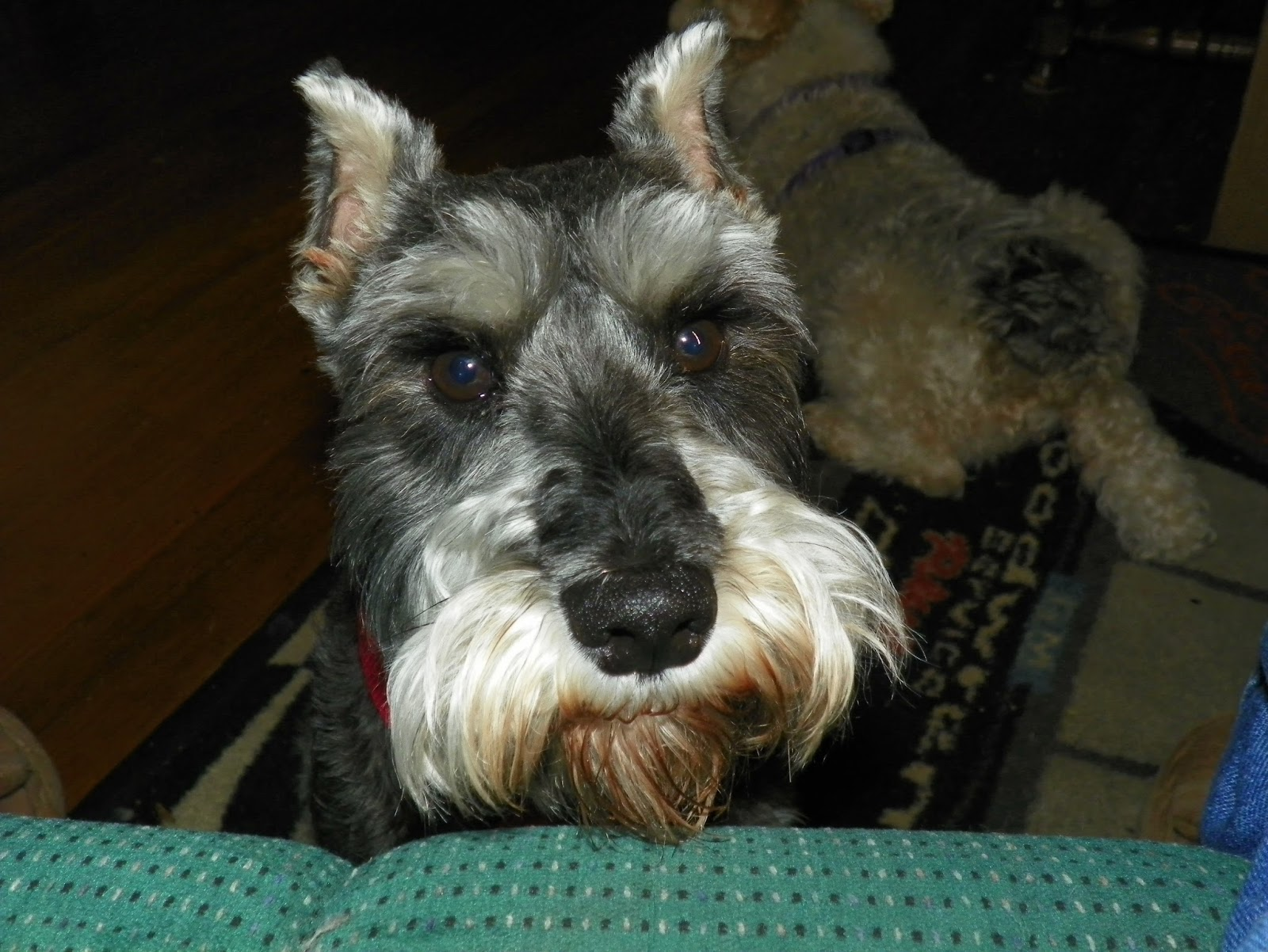 Underdog\'s Utterings: Wire Haired Fox Terriers