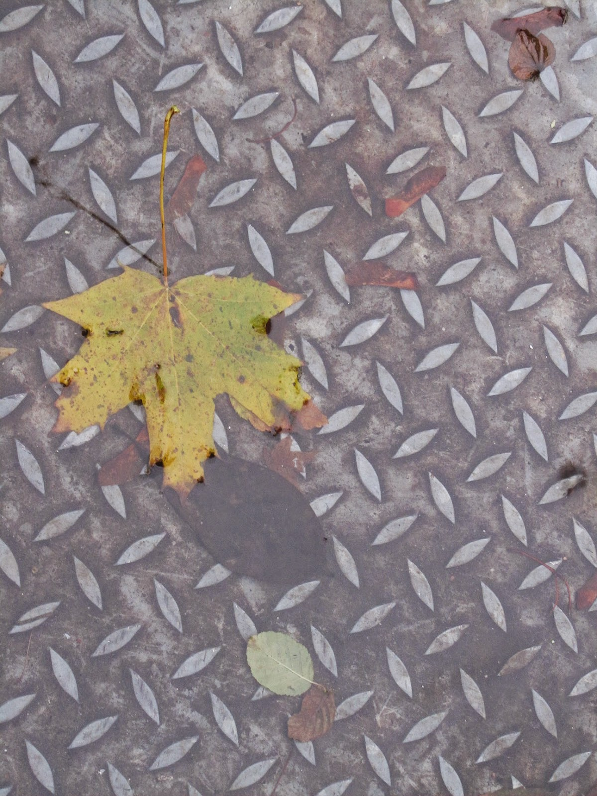 leaf in a puddle of water