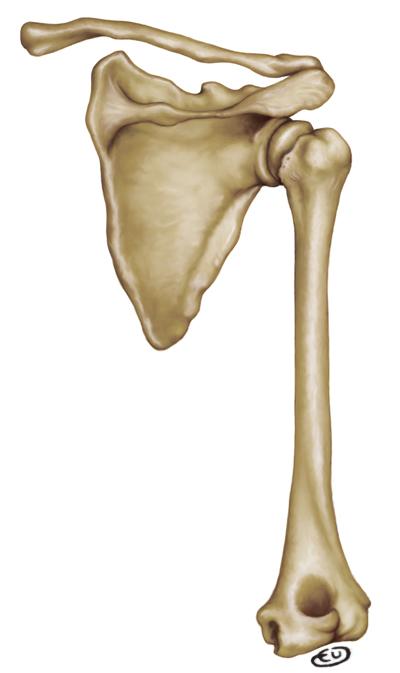 eufepru: Arrimar el hombro