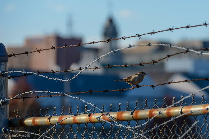 Portland, Maine Put a Bird on it barbed wire photo by Corey Templeton