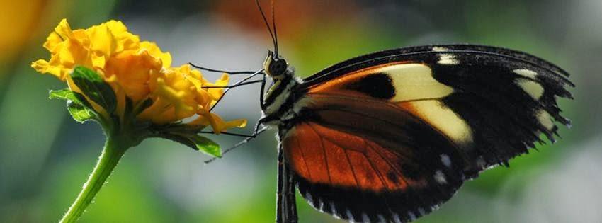 Couverture pour facebook papillons exotiques 1
