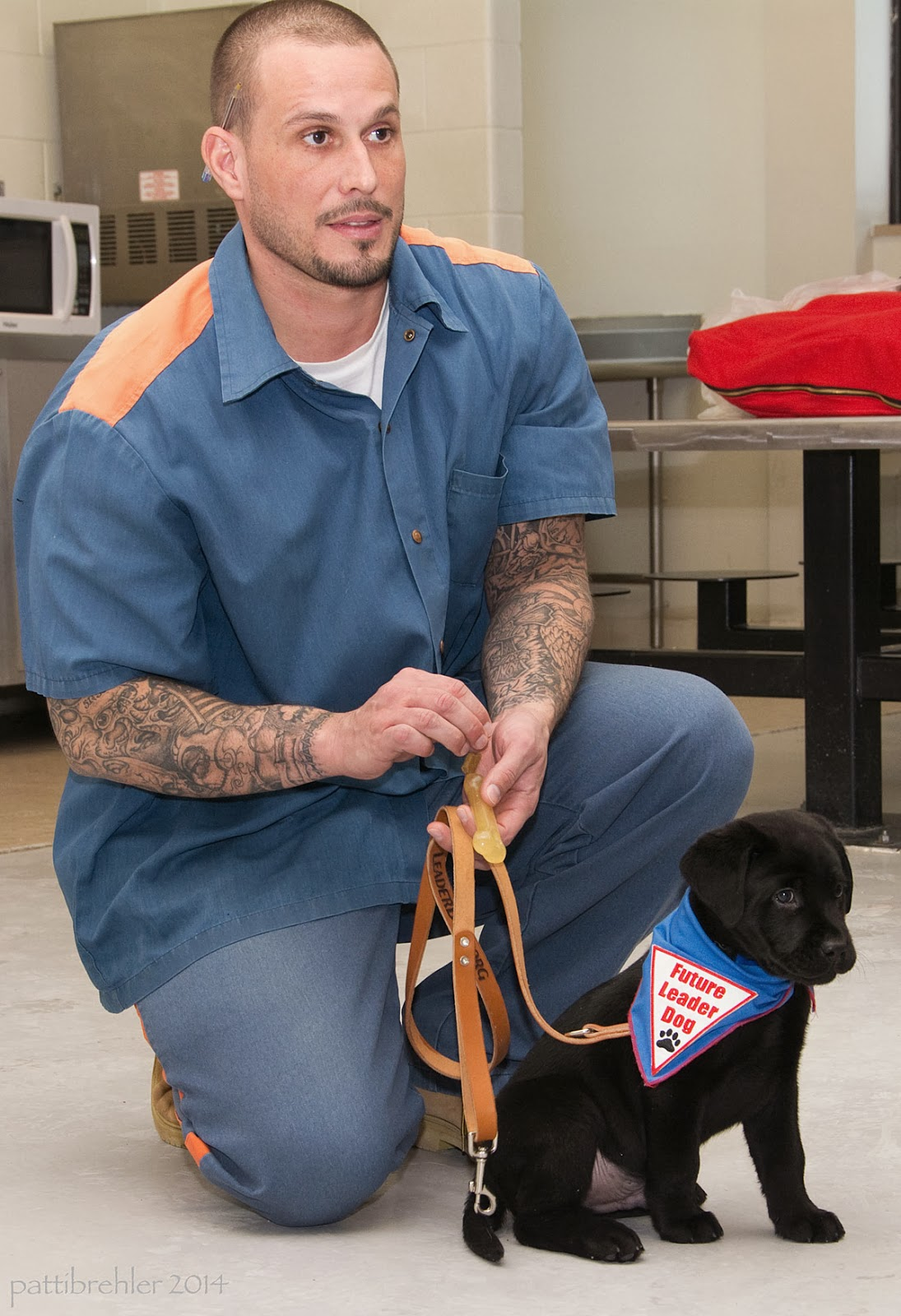 A young man dressed in the prison uniform of blue shirt and blue pants with orange stripes on the shoulders and legs is holding a brown leash and squatting behind a small black lab puppy. The puppy is wearing a blue bandana with a white triangle patch with red letters that say Future Leader Dog and a black paw print. The man has tattoos down both arms.