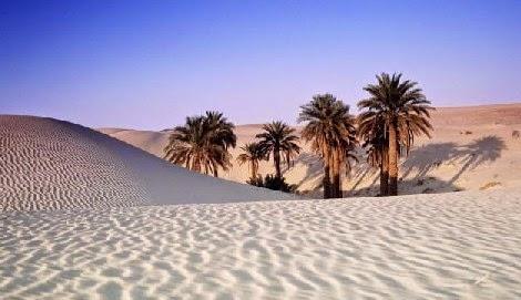 Para guerreiro sacerdote há bosque em pleno deserto