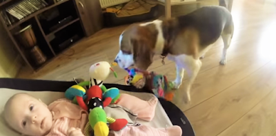 guilty dog apologizes to boy for stealing toy