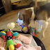 Guilty Dog Apologize to a Crying Baby After Stealing One of the Baby's Toys