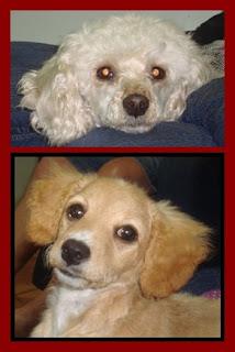 Dolly e Dafny, companheirinhas fiéis...