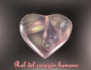 Querido, el corazón humano juega un rol importante para todo el mundo, incluso en aquellos que no son conscientes de lo que hacen.