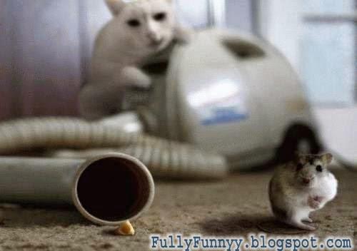 Cat's Amazing Net