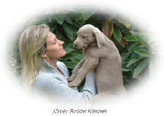 Silver Brook Kennel