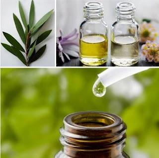 Tea tree oil benefits in skin care