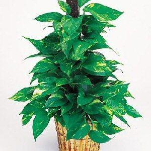 Send A Green Plant Garden for Secretaries Day