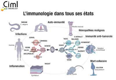 Cours  Immunologie svi s5