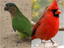 La Riqueza de Aves