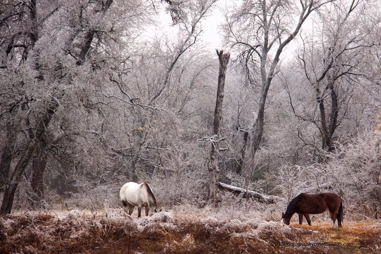 Horses in the Icy Forest